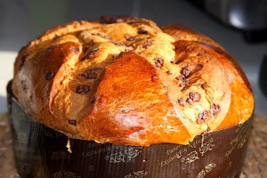 Chocolate Chip Panettone
