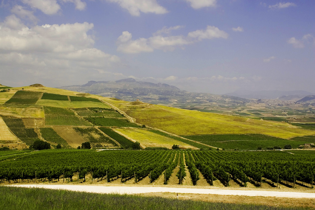 sicily vineyards, area of production of Grillo wine