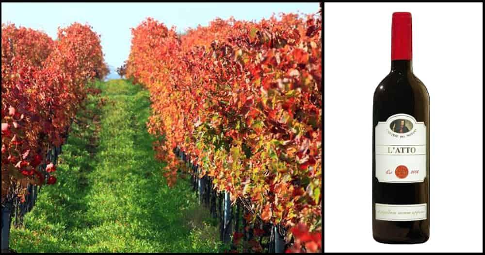 Aglianico grapes from Campania